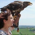 Greifvogelschau auf der Riegersburg