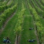 Kuglen im Weingarten - einfach die Natur genießen
