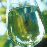Weißweine, dafür ist die Steiermark weltweit bekannt.